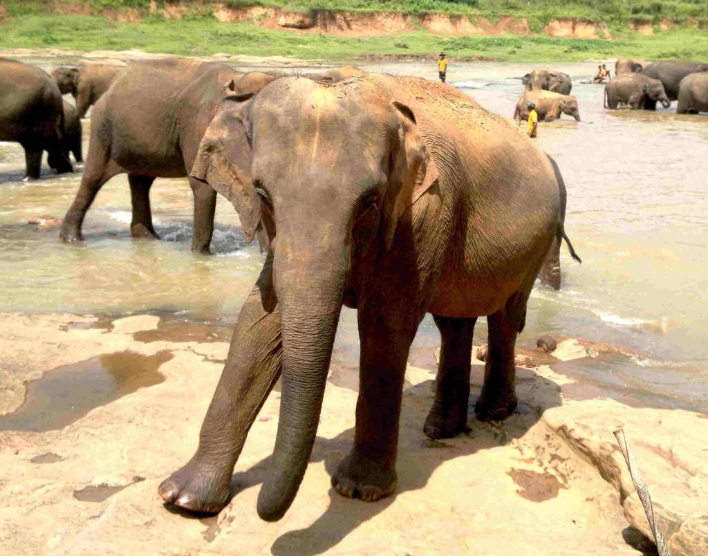 Elephant - babki.kz