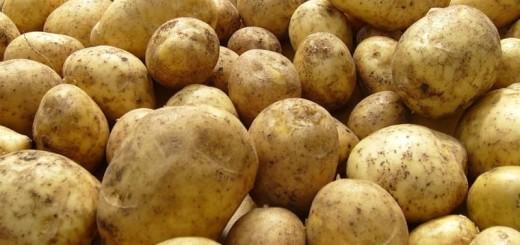 Картошка на продажу
