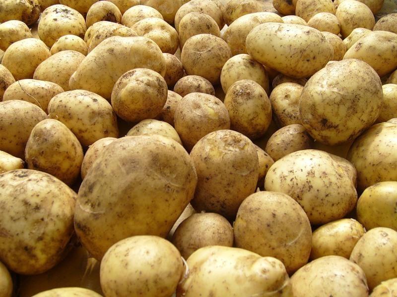 Бизнес идеи картошка бесплатно скачать книгу бизнес идеи