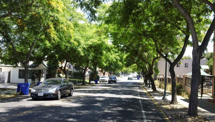Город с деревьями